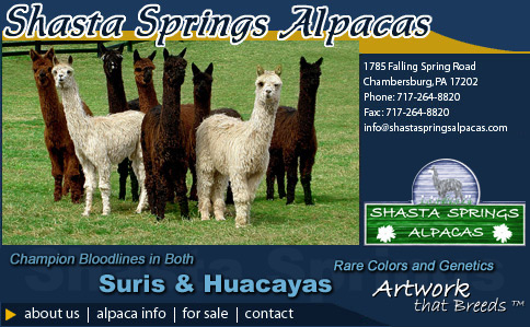 Shasta Springs Alpacas - Friendly, Gentle Suri & Huacayas That Are Part of the Family